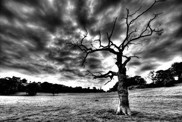 copacul-mortii