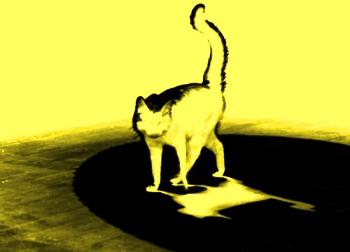pisica-fantoma