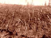 Copaci doborati la pamant la locul exploziei