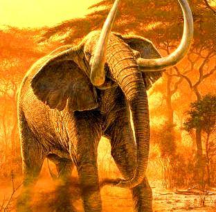 elefant50