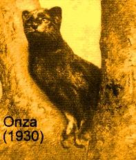 onza 2