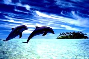 delfini20