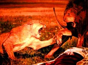 lupta-intre-animale