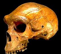 craniul de la Broken Hill