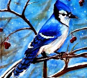 gaita albastra