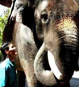 Kosik elefant vorbitor