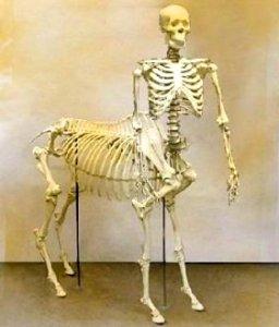 Scheletul unui centaur expus la muzeu??? Chiar au existat centaurii?