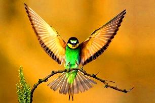 Păsările, la fel de inteligente ca un copil de 7 ani… Tot mai credeţi că evoluţionismul e teoria corectă?