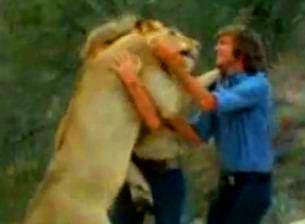 """Incredibilul leu Christian: dovada că şi leii, aceste animale """"sălbatice"""" au suflet şi pot iubi"""