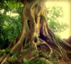 Arbori bătrâni din întreaga lume mor pe capete, punând în pericol viaţa pe planetă. Ce se întâmplă?