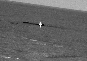 NASA iar ne surprinde cu poze incredibile! A fotografiat un posibil înger pe planeta Marte!