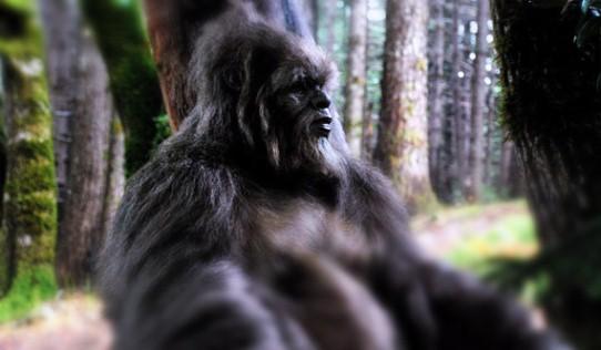 Bigfoot80