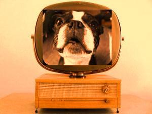 Un om şi-a văzut propriul câine la TV...Numai că acesta era mort demult şi... omul nu avea nicio filmare cu el! Incredibil!
