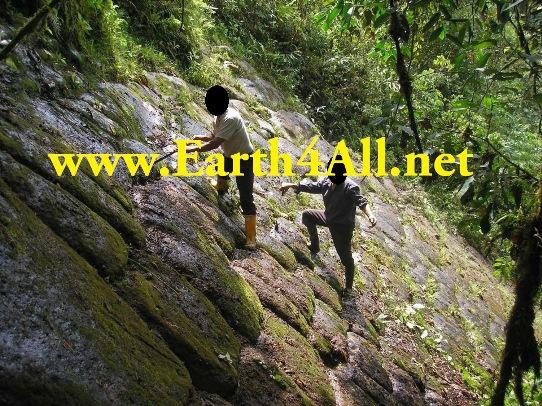 piramida jungla ecuadoriana