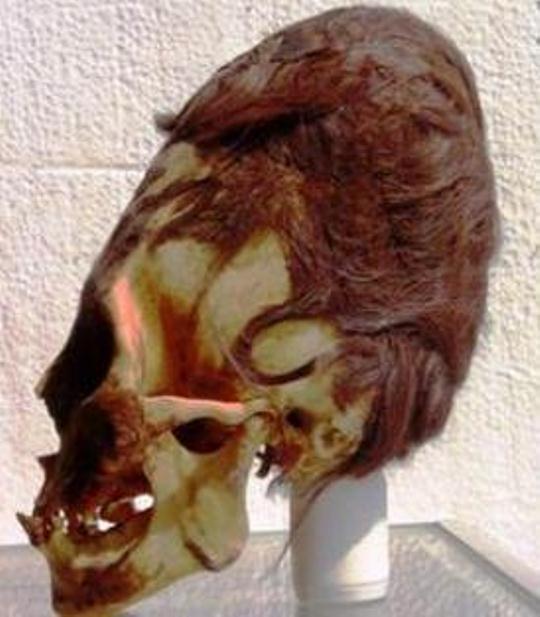 cranii Paracas 2