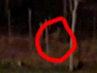 creatura paranormala in padure