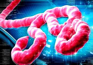 ebola 30