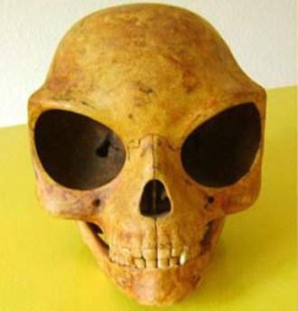 Craniul Sealand, unul dintre cele mai misterioase cranii descoperite în ultimii ani! El a aparţinut fie unui extraterestru fie unei specii umane dispărute cu mii de ani!