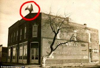 Un monstru bizar cu aripi, jumătate-om, jumătate-animal, a bântuit un oraş din SUA! Creatura înaripată se deplasa cu viteze enorme şi avea o lumină orbitoare ce-i ieşea dintre coarne!