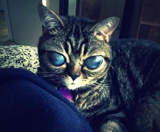 pisica extraterestra