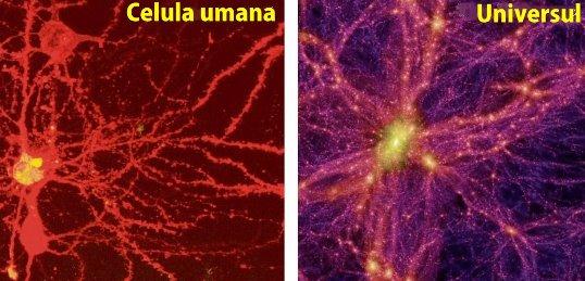 celula umana univers