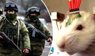 """Preşedintele Rusiei, Vladimir Putin, se pregăteşte să elibereze o armată de şobolani """"cyborgi"""" care să descopere bombele teroriştilor ISIS!"""