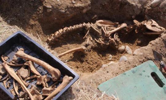 schelet de monstru
