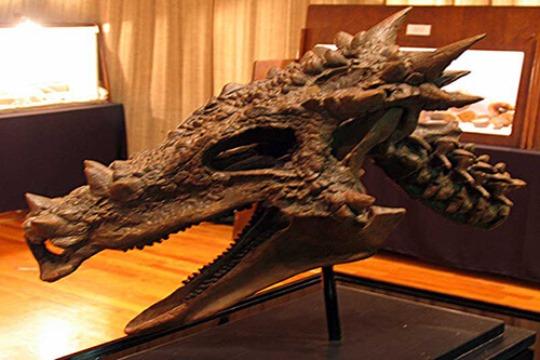 Dracorex-Hogwartsia