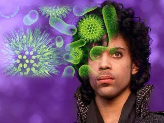 Prince bacterie