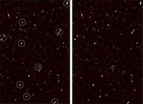 gauri negre aliniate