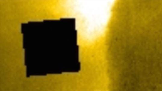 cub negru NASA 1