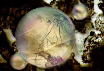 bacterie-imortala