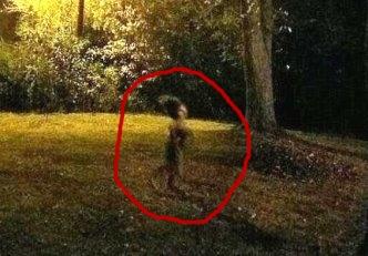 O creatură extrem de ciudată a fost fotografiată noaptea, plimbându-se într-o grădină...
