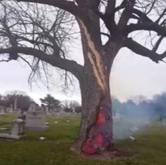 Incredibil! Iată ce se întâmplă cu un copac după ce-a fost lovit de fulger...