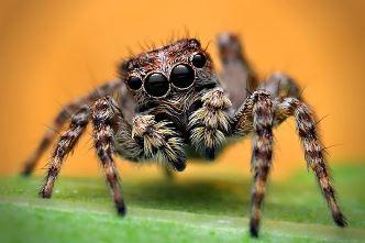 O, păianjenilor, ne produceţi repulsie cu picioarele voastre păroase, dar n-am putea trăi fără voi...