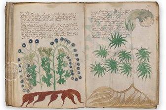 """Matematicienii ruşi au reuşit descifrarea misteriosului """"Manuscris Voynich"""", după mai bine de 600 de ani"""