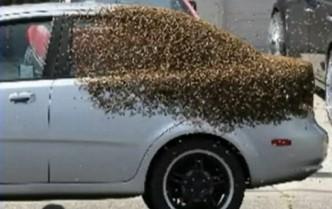 Alertă în Londra! Roiuri de albine au invadat capitala Marii Britanii