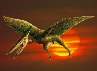 """Când se construia o cale ferată în Franţa, muncitorii au descoperit un pterodactil viu, o specie de """"dinozaur zburător"""" care a trăit acum 150 de milioane de ani!"""