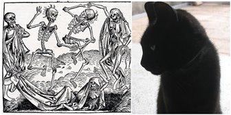 """În Evul Mediu, creştinii omorau pisicile, pentru că credeau că acestea erau """"instrumentele diavolului"""" care răspândeau ciuma în lume"""
