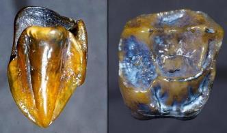 Această descoperire veche de 9,7 de milioane de ani ar putea rescrie istoria omenirii
