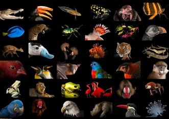 Ştiaţi că... crocodilul trăieşte 300 de ani, iar unii papagali - 140 de ani?