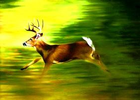 Cele mai rapide 5 animale din lume