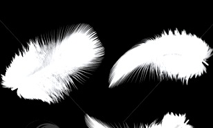 Penele albe, semnele prin care cei morţi vor să ne spună că ei înca trăiesc