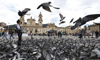 V-aţi întrebat vreodată de ce sunt atât de mulţi porumbei în oraşe?