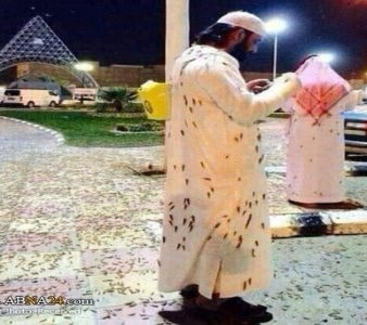 Ceva bizar se întâmplă în Mecca, oraşul sfânt al musulmanilor: roiuri uriaşe de lăcuste şi gândaci au invadat oraşul!