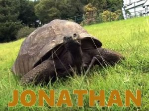Iată-l pe Jonathan, cea mai bătrână creatură de pe Terra... Nu peste mult timp, va atinge vârsta de 200 de ani!