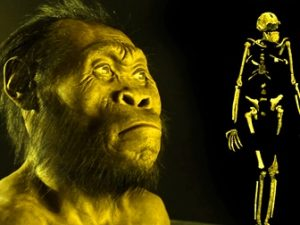 O nouă specie umană descoperită îi şochează pe paleontologi - Homo Naledi. Dovada că teoria evoluţionistă clasică este greşită!