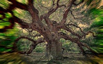 Uimitoarea Terra: copaci bătrâni de 5.000 de ani sau înalţi de peste 100 de metri...