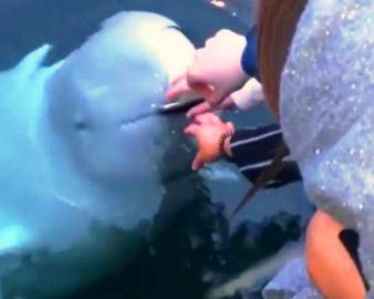Ruşii folosesc balene pe post de spion? O femeie şi-a scăpat iPhone-ul în mare, dar acesta i-a fost returnat de o balenă albă foarte inteligentă...
