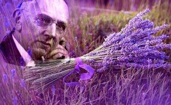 Levănţica este planta mijlocitoare dintre îngeri şi oameni – spunea celebrul profet Edgar Cayce